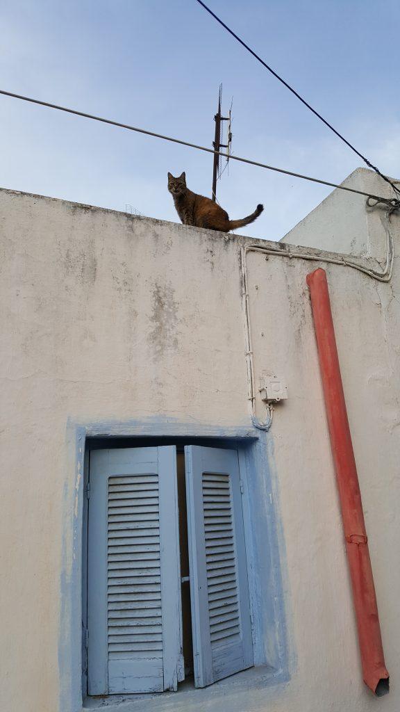 Katze in Kos Stadt
